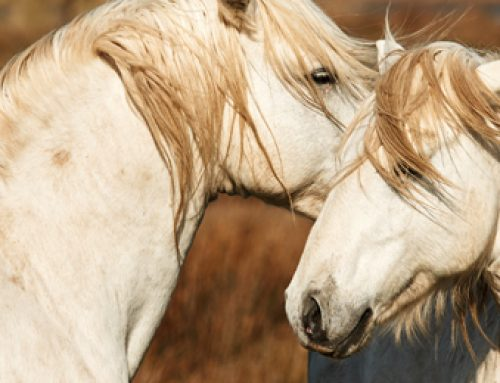 Equine Parasite Prevention: The seen and unseen pests